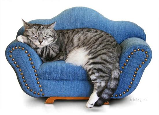 cat-divan01