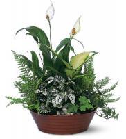 gift-flowers26