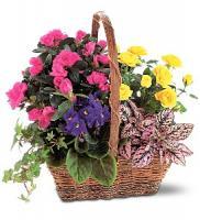 gift-flowers6