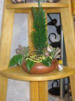 combo-plant14