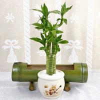 combo-plant16