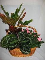combo-plant2