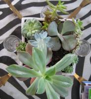 combo-plant26