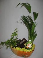combo-plant5