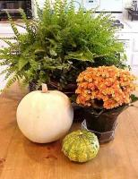 mini-pumpkins-ideas4