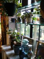 plant-composition28