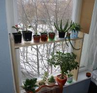 plant-composition31