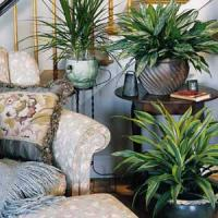 plant-composition32