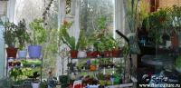 plant-composition34