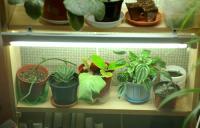 plant-composition39