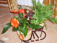 plant-composition40