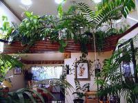 plant-composition9