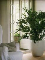 plant-best-single10
