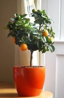 plant-best-single11