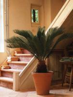 plant-best-single16