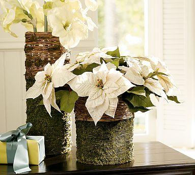 winter-flowers10