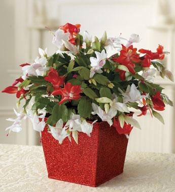 winter-flowers17