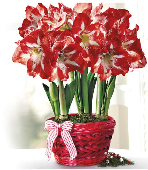 winter-flowers2
