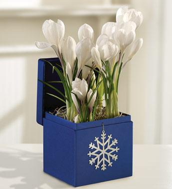 winter-flowers4
