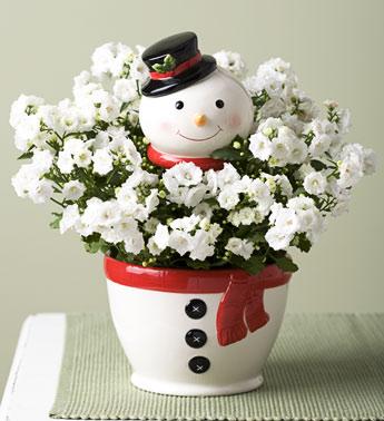 winter-flowers7