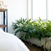 eco-style-ideas-green2