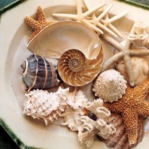 eco-style-ideas-seashell1