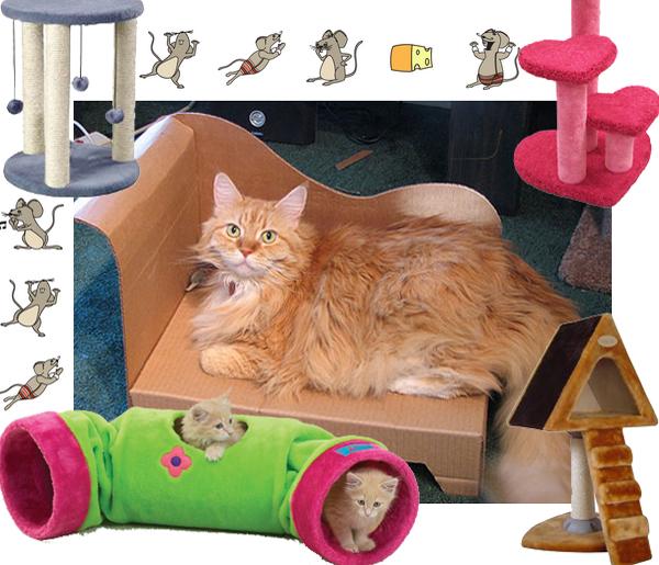 pets-furniture-cats1