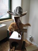 pets-furniture-cats23