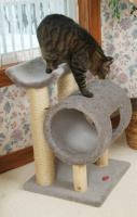 pets-furniture-cats32