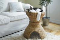 pets-furniture-cats8