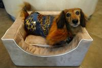 pets-furniture-dogs6