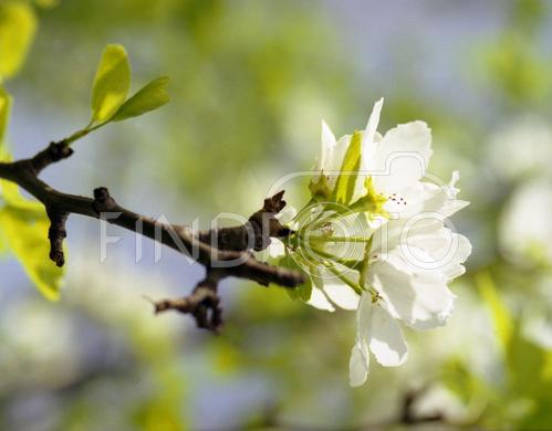 spring-inspire-fresh2