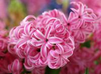 spring-inspire-giacint-fl2