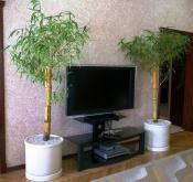 bamboo-decor-ideas-plant3