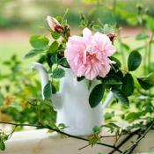 creative-rose-composition-vase-tips10
