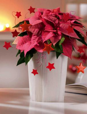christmas-table-setting-red-diy2