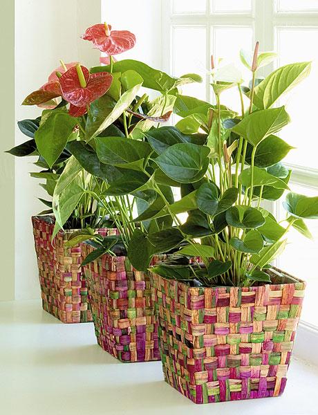 home-plants-creative-ideas