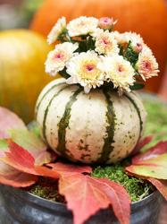 pumpkin-as-vase-creative-ideas2