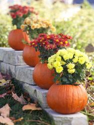 pumpkin-as-vase-creative-ideas5