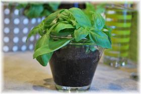 ephemeral-garden-table-setting17