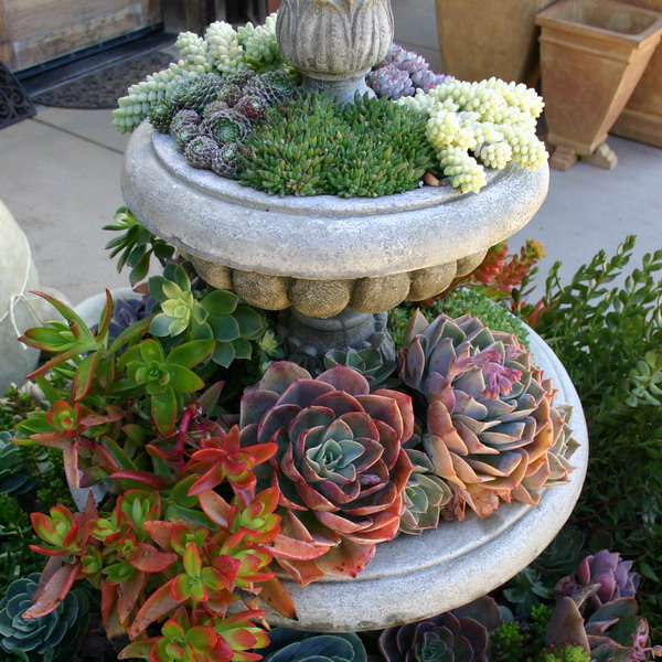 succulent-garden-in-home-and-outdoor