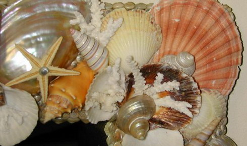 summer-sea-decoration-seashell