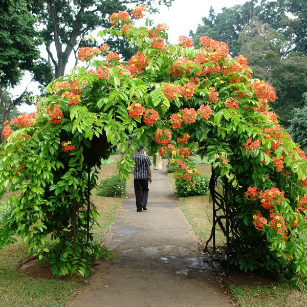 arbor-and-archway-in-garden