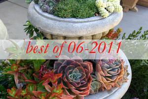 best10-succulent-garden-in-home-and-outdoor