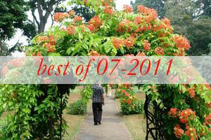 best11-arbor-and-archway-in-garden