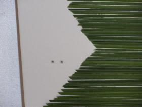 diy-flowers-and-grass-collage-step8