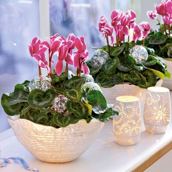 home-flowers-in-new-year-decorating