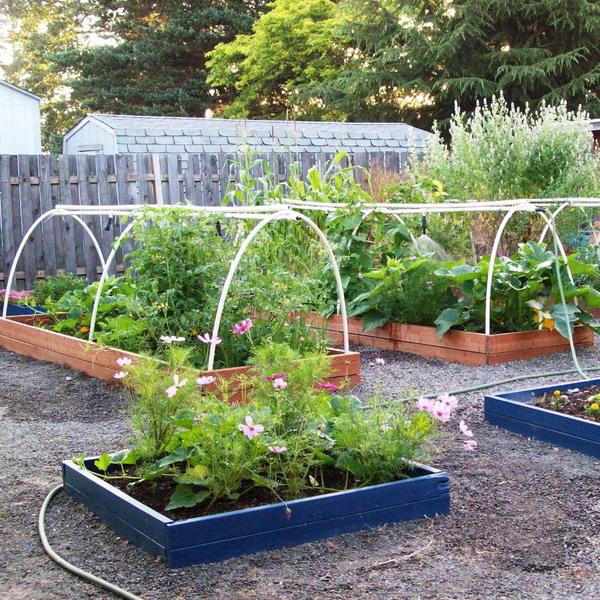 vegetable-garden-ideas
