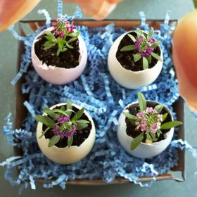 flowers-in-egg-shell-ideas10
