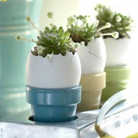 flowers-in-egg-shell-ideas11